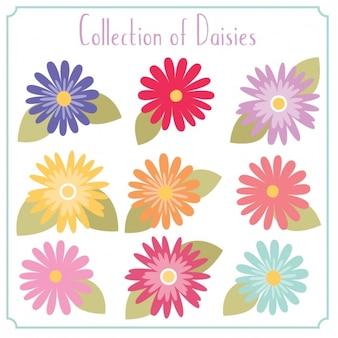 Coleta de flores decorativas