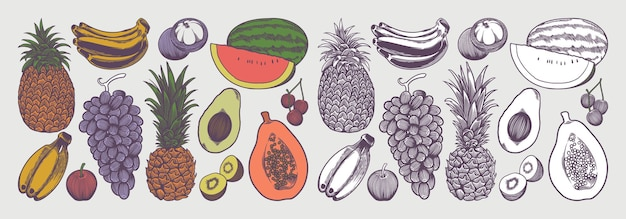 Coleta de frutas com desenho de esboço em estilo vintage