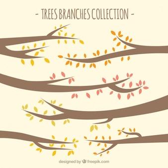 Coleta de galhos de árvores
