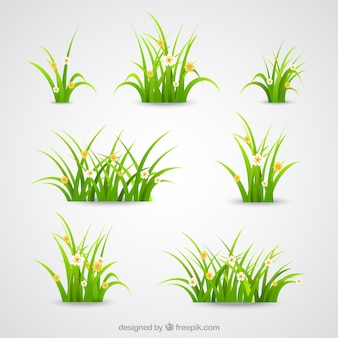 Coleta de grama verde