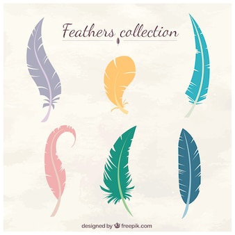 Coleta de penas coloridas