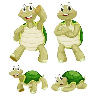 Coleta de tartarugas colorido