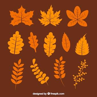 Coleta quente de várias folhas de outono