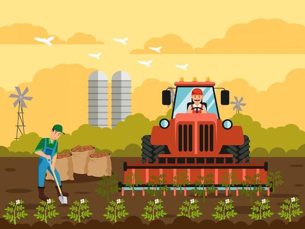Colheita de batata em ilustração vetorial plana de campo