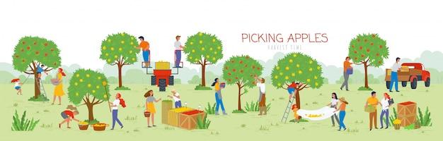 Colhendo o tempo de colheita de maçãs, as pessoas no jardim
