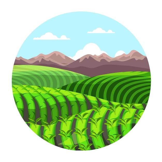 Colinas de plantação de chá verde em paisagem de montanhas