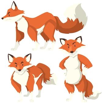 Colorido raposas coleção