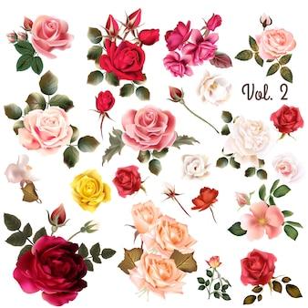 Colorido rosas coleção