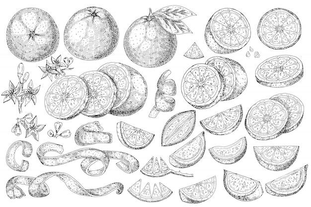 Comida de mão desenhada frutas cítricas laranja.