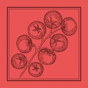 Comida italiana de planta de tomate desenhada