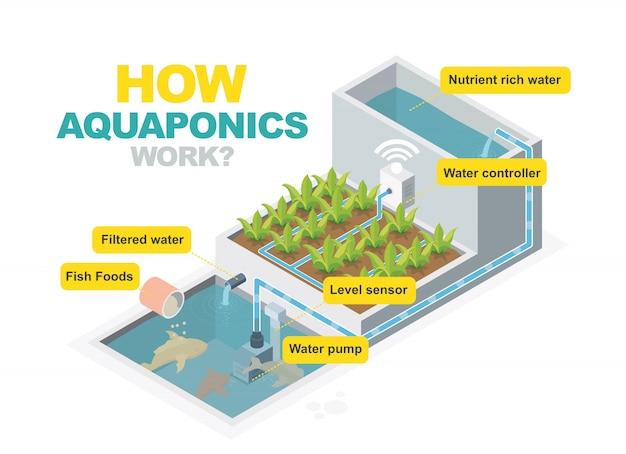 Como o sistema aquaponics funciona isométrico