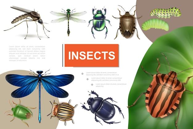 Composição colorida de insetos realistas com besouro do colorado em folha de batata, libélulas, lagartas, mosquito, fedor, e, escaravelho