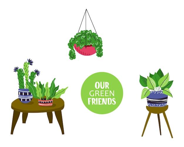 Composição com plantas em vasos para casa ou flores