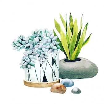 Composição de cactos em vasos e suculentas