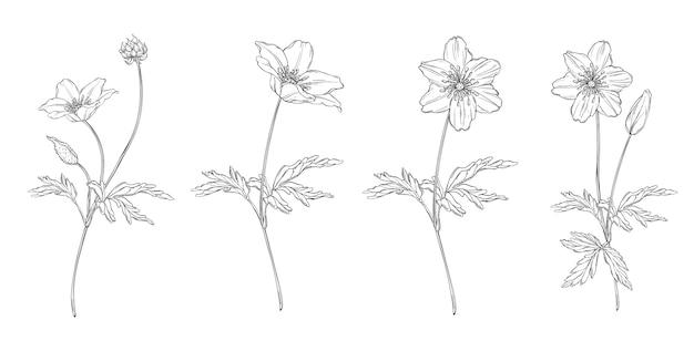 Composição preto e branco floral conjunto com flores de anêmona