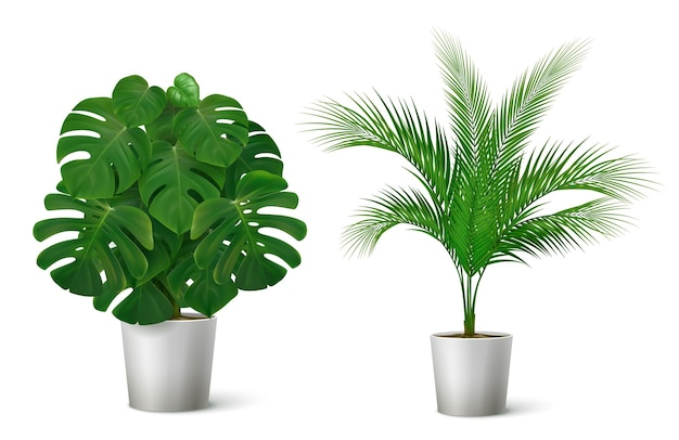 Composição realista com ilustração de plantas tropicais em vasos