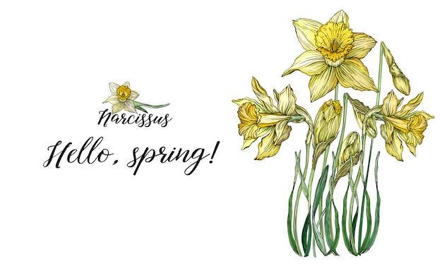 Composições de primavera floral brilhante com flores de narciso.