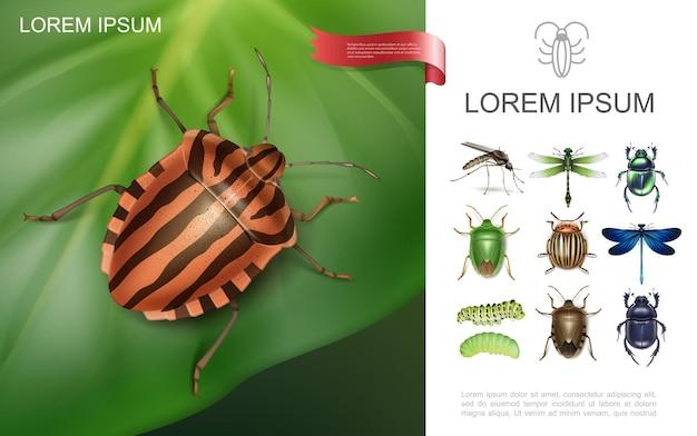 Conceito colorido de insetos realistas com besouro do colorado em folha de batata, libélulas, mosquitos, lagartas, esterco e escaravelhos