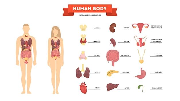 Conceito de anatomia humana. corpo feminino e masculino