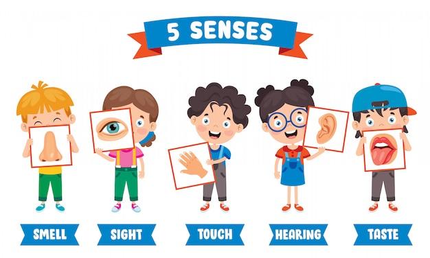 Conceito de cinco sentidos com órgãos humanos para crianças