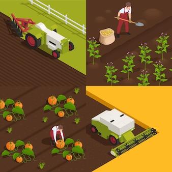 Conceito de colheita 4 composições isométricas com trabalhadores agrícolas