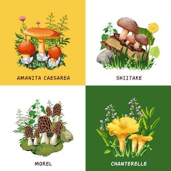 Conceito de design de cogumelos selvagens