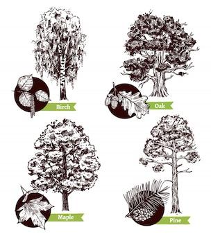 Conceito de design de folhas de árvore de esboço