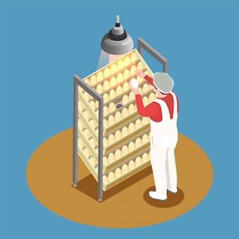 Conceito de design isométrico de fazenda de galinha com rack de incubadora e funcionário olhando através de ovos de galinha