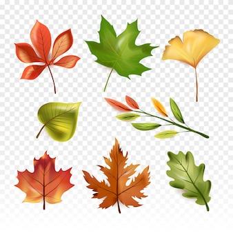 Conceito de folhas de outono floresta