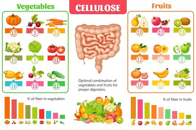 Conceito de infográfico de nutrição saudável dos desenhos animados