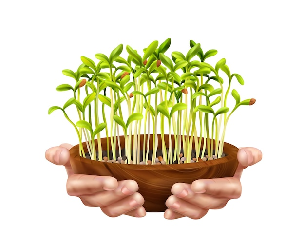 Conceito de microgreens de nutrição saudável com símbolos de alimentos orgânicos realistas