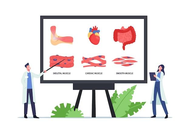 Conceito de saúde muscular. personagens de minúsculos médicos no enorme tabuleiro com infográficos apresentando musculatura esquelética, cardíaca e lisa. medicina, anatomia dos músculos. ilustração em vetor desenho animado