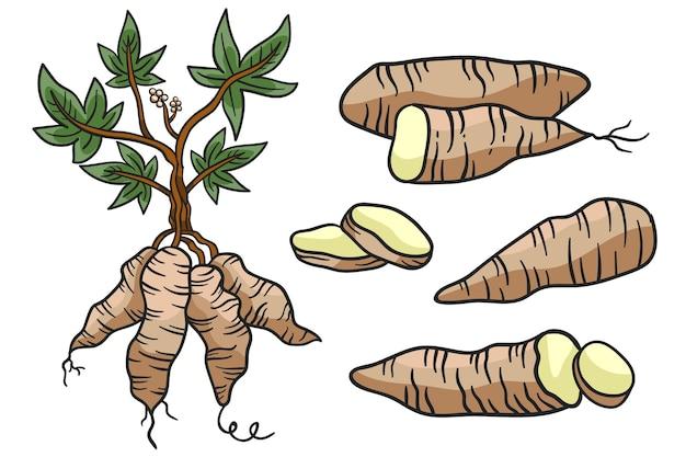 Conceito de tapioca desenhado à mão