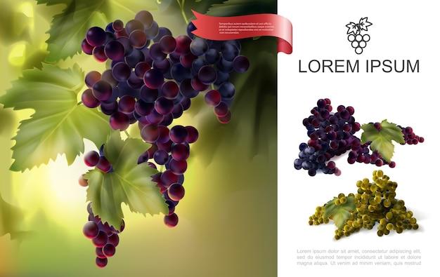 Conceito de uvas naturais frescas