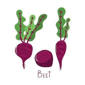 Conceito vegetal de beterraba desenhada à mão. ilustração plana moderna