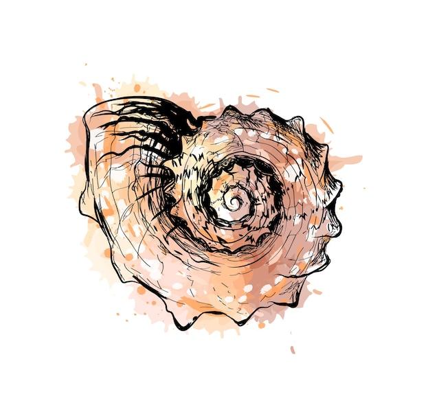 Concha do mar com um toque de aquarela, esboço desenhado à mão. ilustração de tintas