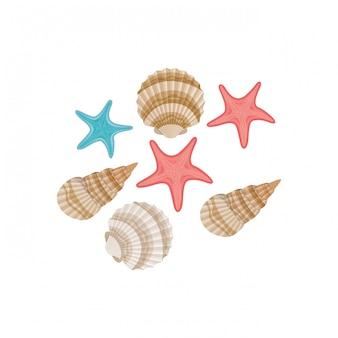 Conchas do mar bonito no mar em branco