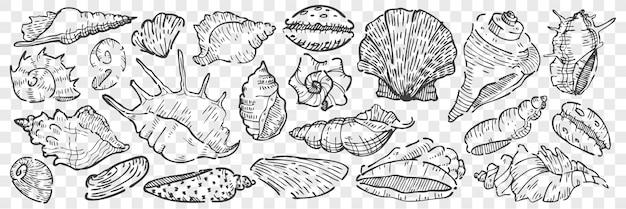 Conchas do mar mão desenhada doodle conjunto.