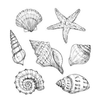 Conchas do mar mão desenhada