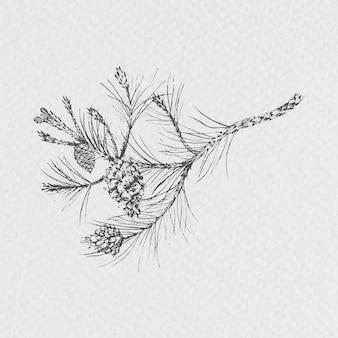 Cone de conífera desenhado à mão
