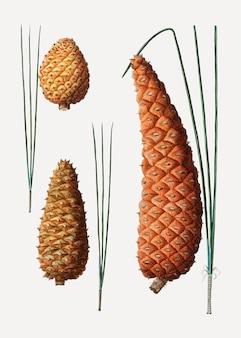 Cones de coníferas