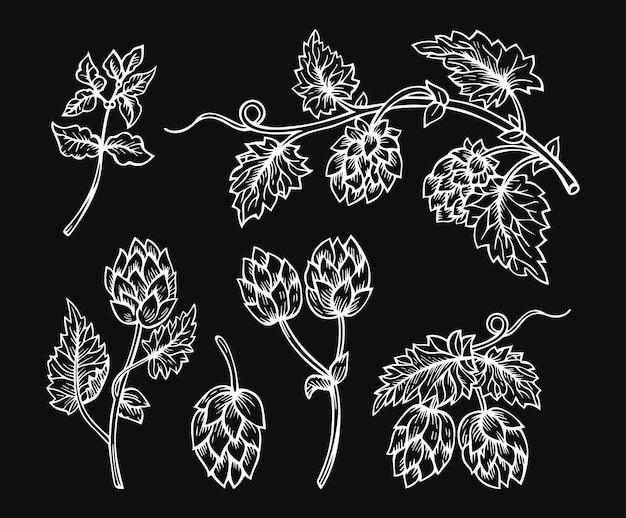 Cones de lúpulo gravando desenho de esboço desenhado à mão