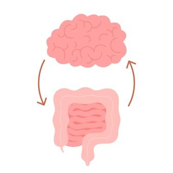 Conexão do cérebro saudável e intestino intestino saúde relação do cérebro humano e intestino segundo cérebro