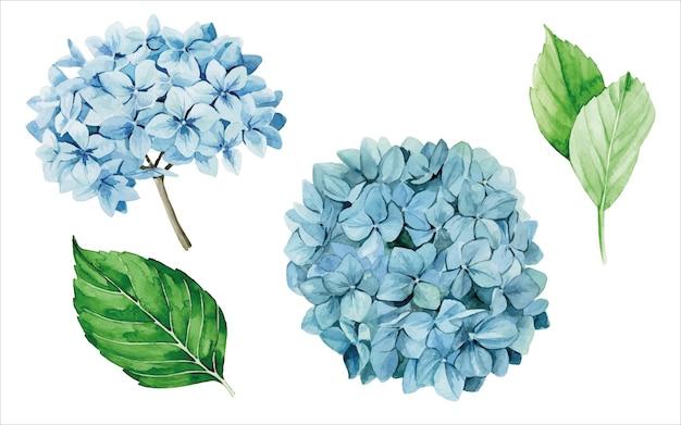 Conjunto aquarela de hortênsias azuis