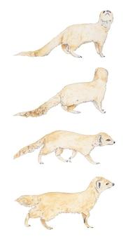Conjunto aquarela de suricatos