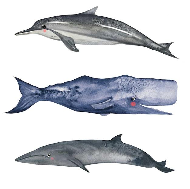 Conjunto bonito de baleia e golfinho em aquarela arte vetorial em aquarela