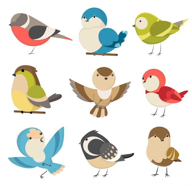 Conjunto bonitos passarinhos coloridos isolados no branco. casal comum pardal, masculino e feminino. pequenos pássaros no estilo bonito dos desenhos animados. isolado clip art ilustração