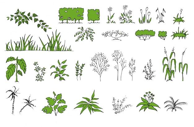 Conjunto botânico com folhas. samambaia, eucalipto, buxo. coleção floral vintage