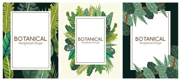 Conjunto botânico de fundo