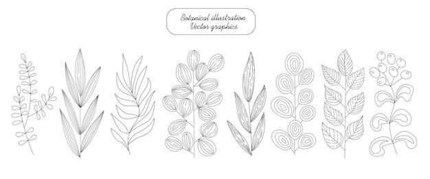 Conjunto botânico de ramos e ervas desenhados à mão